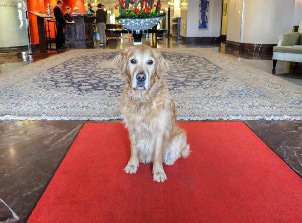 Hundefreundliche Hotels Falkensteiner Velden